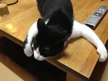350テーブルに掴まる猫.jpg