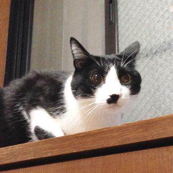 350恐怖におののいて凍結する猫.jpg