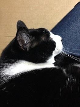 350持ち良さそうな寝顔の猫.jpg