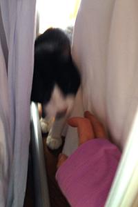 いたずら猫が洗濯物の隙間から 02 袖カバーした手.jpg