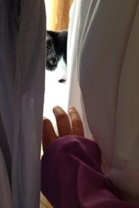 いたずら猫が洗濯物の隙間から 03 もういい.jpg