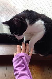 いたずら猫が洗濯物の隙間から 06 もう遊ばないんですか.jpg
