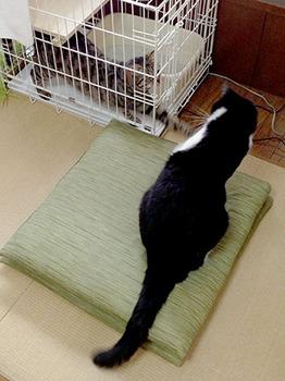 エルちゃん12日目 05ニャーニャーパンチ.jpg