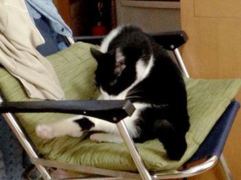 エルちゃん12日目 25チョビ椅子で毛づくろい.jpg