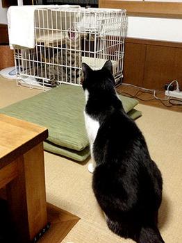 エルちゃん12日目 42エルちゃんおおあくび.jpg