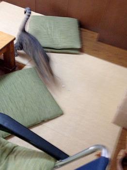 エルちゃん15日目 09若者はエンドレスに遊ぶ.jpg