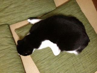 オットセイ猫 上-1.jpg