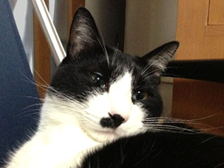 カイロ猫 べつに-1.jpg