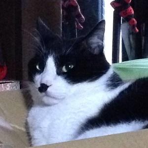 スチームクリーナーの箱の上で自信を深める猫.jpg