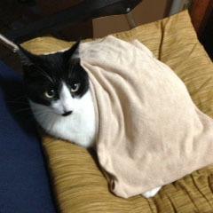 タオル猫 かけてもらった-1.jpg