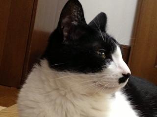 トールサイズ猫 くつろいでいると.JPG