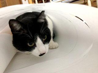 ドレスの邪魔猫 型紙の中からにらむ-1.jpg