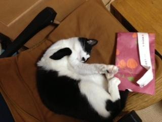 包装紙落下事故 のび~.jpeg