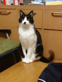 参加型の猫 しっぽパタパタ-1.jpg