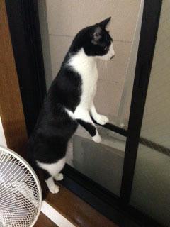 外猫発見 伸びあがる.jpeg