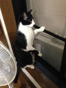 外猫発見 窓に手をかける.jpeg
