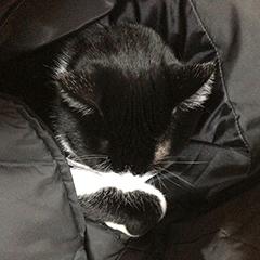 寒い日の猫 02 1回目 ダウンジャケット 鼻を隠す.jpg