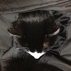 寒い日の猫 03 2回目 ダウンジャケット すっぽり.jpg