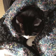 寒い日の猫 04 3回目 ひざ掛け.jpg
