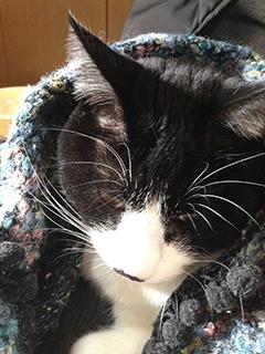 寒い日の猫 05 3回目 ひざ掛け 睨まれた.jpg