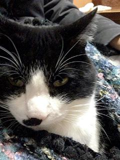 寒い日の猫 08 5回目 ひざ掛け また寝ている また睨まれた.jpg