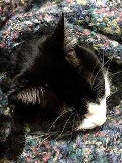 寒い日の猫 09 6回目 ひざ掛け まだまだ寝ます.jpg