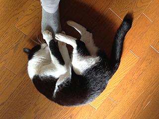 居座る猫06 ケリケリ攻撃しながら匂いを嗅ぐ.jpg