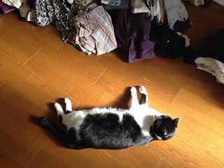 居座る猫09 ということだ では.jpg