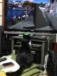 岩合光昭 そっくりな猫 後ろ姿.JPG