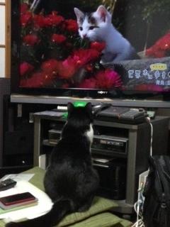 岩合光昭 赤い花.JPG