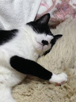 心地よく眠る猫1.jpg
