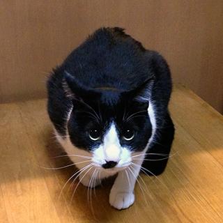 抱っこ警戒中の猫.jpg
