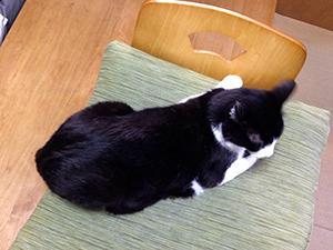 掃除機を怖がらない猫 03 座布団ごと移動.jpg
