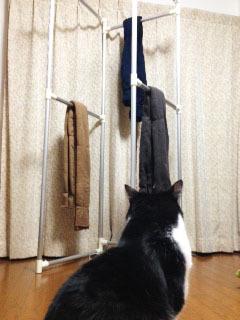 枷縛りと猫 見つめる-1.jpg