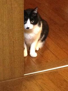 様子を見る猫 上目づかい-1.jpg