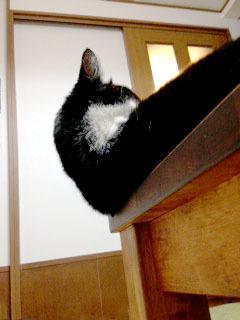 猫がオーバーハングしています 下から見たところ-1.jpg