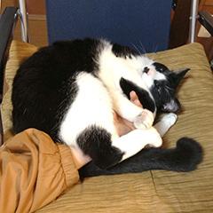猫にプロレス技をかけられた.jpg