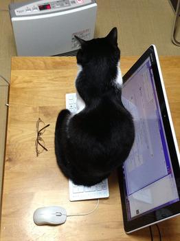猫のベストポジション 快適な後ろ姿.jpg