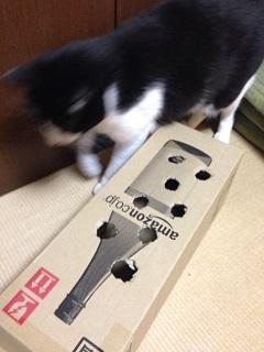 猫のモグラたたき010チョビ君が来た.jpg