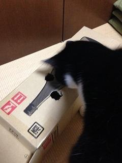 猫のモグラたたき040中をのぞき込む.jpg