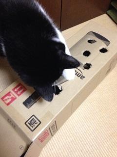 猫のモグラたたき060もう一度覗き込む.jpg