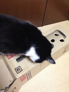 猫のモグラたたき080暗闇を凝視する.jpg