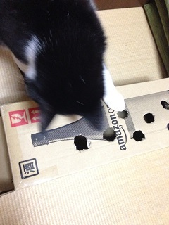 猫のモグラたたき140激しく引っ掻く.jpg