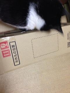 猫のモグラたたき150箱横転.jpg