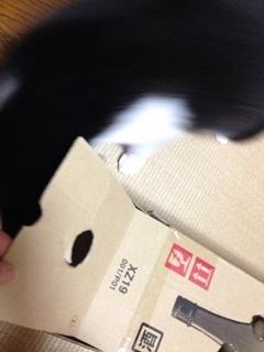 猫のモグラたたき160内部に潜入.jpg