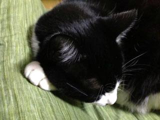 猫の手の先 アップ-1.jpg
