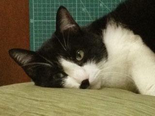 猫をズームする バストショット-1.jpg