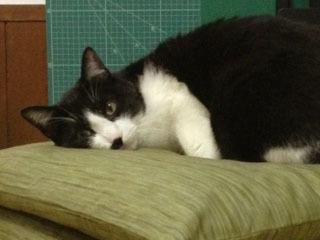 猫をズームする 上半身-1.jpg