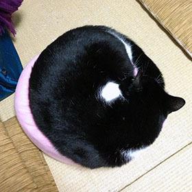 猫丸280.jpg
