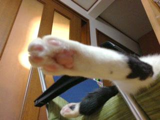 猫足仰角 こんなかんじ1-1.jpg